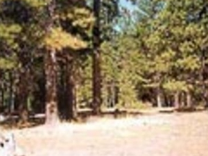 Lassen Almanor Campground