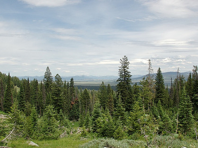 Along Bradley Lake Trail - Grand Tetons - Wyoming - USA
