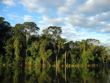 Altantic Forest In Paraguay