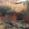The Amargosa River Flows Through Beatty