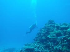 Amazing Underwater Adventure