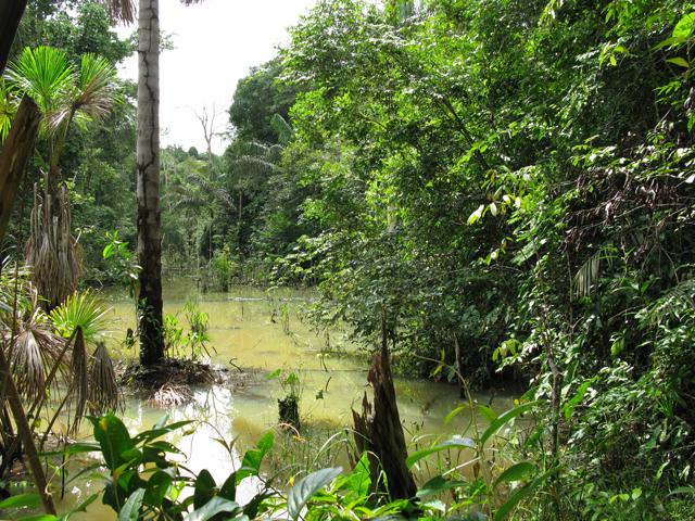 Jungle Adventure Tour Photos