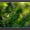 Amboli Flora