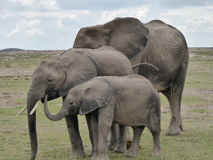 5 Days Maasai mara, Amboseli, Nakuru and Naivasha safari Fotos