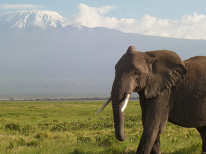 Camping In Amboseli National Park Photos