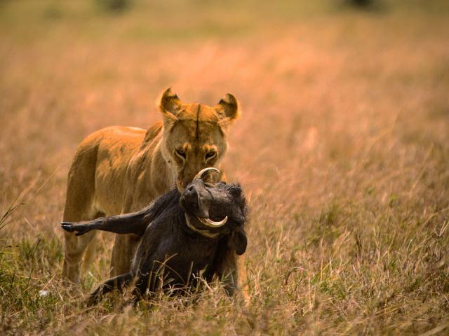 Adventure Kenya - 8 Days Tour Photos