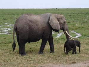 Mt. Kilimanjaro finest- Amboseli National park