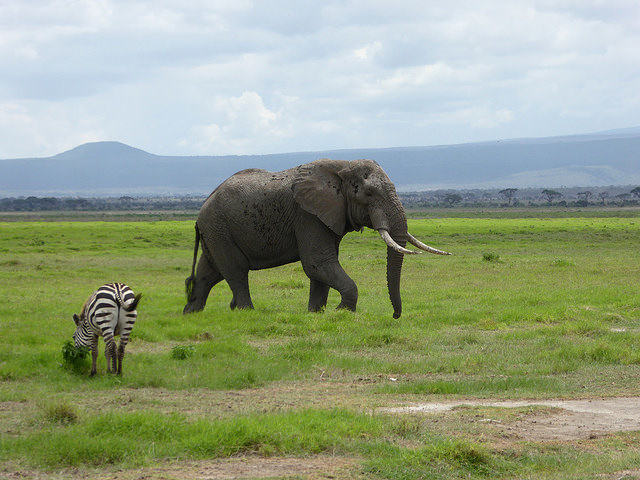 1 Night 2 Days Amboseli National Park Photos