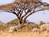 Kenya Safari Offer