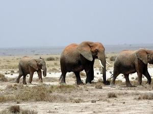 3 Days Amboseli National Park Fotos