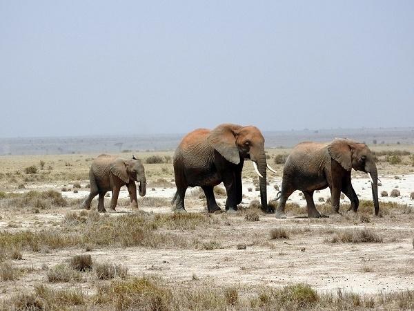 3 Days Amboseli National Park Photos