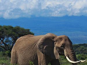 Amboseli Safari Package