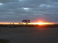 Amboseli 1 Night