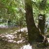 American River Trail