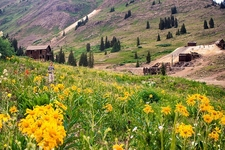Animas Forks Meadow - San Juan Range CO