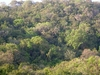 Anshi National Park Forest Canopy