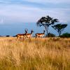 Wildlife Tour to Queen Elizabeth National Park
