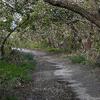 A Passageway Along The Guy Bradley Trail