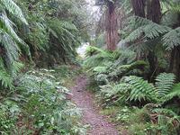 Apiti Mangaawai Hut Saddle à trilha Hut