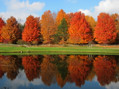 A Pond Fronting A Forest Of Maple Trees In Grandville.