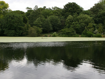 A Pond On Hampstead Heath