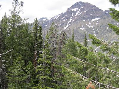 Appistoki Falls Trail At Glacier - Montana - United States