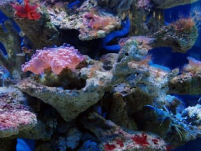 Aquarium & Marine Museum - Sabah