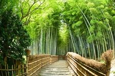 Arashiama - Kyoto