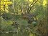 Aravaipa Creek