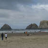 Arch Rocks Off Netarts