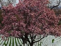 Arlington Cemetery Plus DC War Memorials