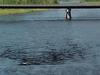Aroostook River