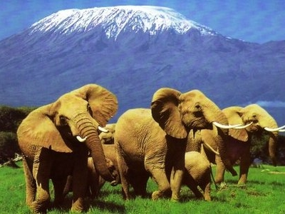 Arusha Travel Agency Ltd - Tours