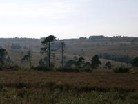 Ashdown Forest