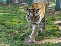 Nagyerdő Cultural Park- Zoo and Botanical Gardens