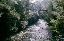 Atiwhakatu Stream