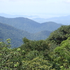 Atlantic Forest In Pernambuco