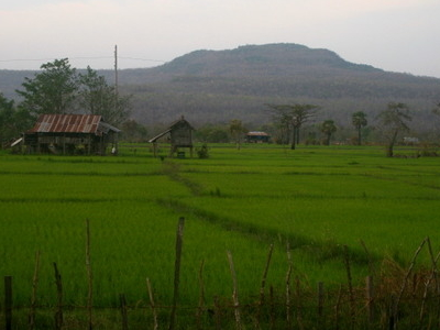 Attapeu Rice Fields