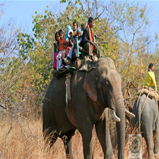 Elephant Safari At Panna