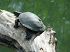 A Turtle At Nature Reservation-