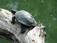 "Reserva-Naturaleza ""Ősláp"" en Csomor"