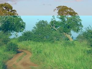 Udawalawe Parque Nacional