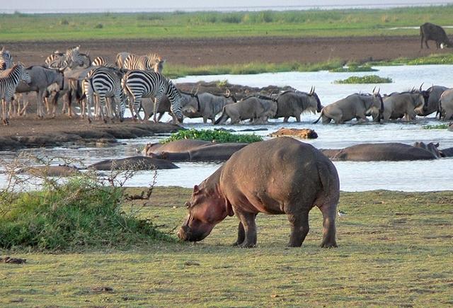 3 - Days Lake Manyara And Ngorongoro Safari Photos