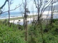 Bosque templado lluvioso valdiviano