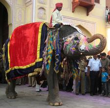 About Jaipur Elephant