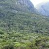 Newlands Bosque