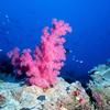 A Healthy Coral