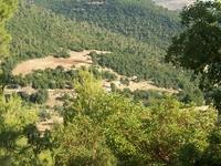 Ajloun Forest Reserve