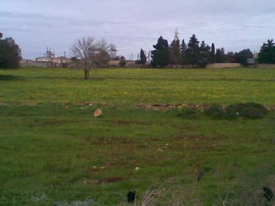 Massa Farm
