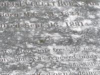 Swan Ponto Cemitério